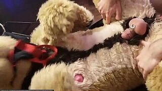 Cock Lover Furry and Fursuit Intercourse two Hours